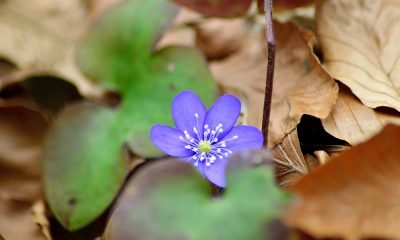 first-of-all-liverworts-2156787_1280