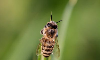 hoverfly-3454075_1280